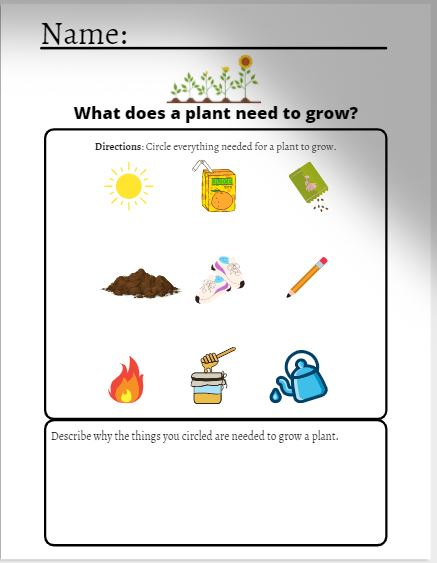 Growing a plant worksheet