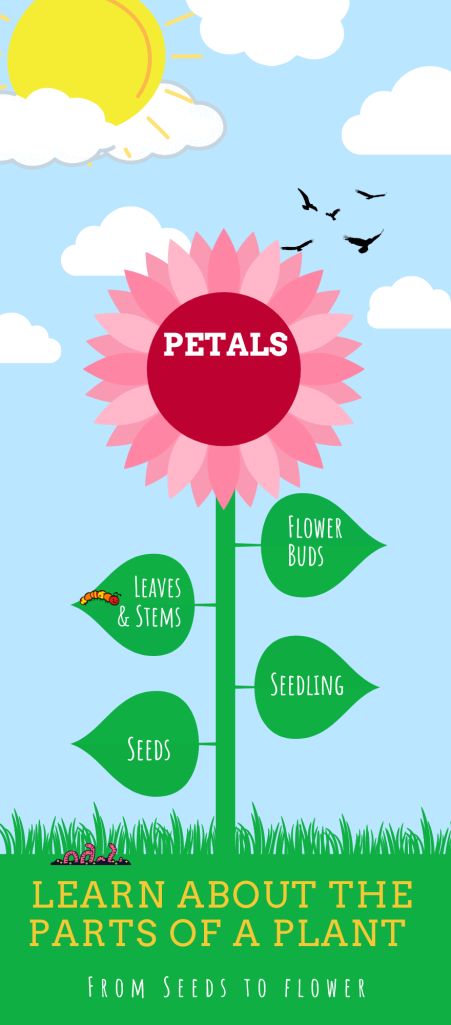 Learn about the parts of a plant infographic